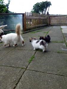 Fenja, die Katze ist immer mit dabei